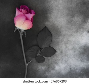 Flower on gray marble - condolence card, with deepest sympathy