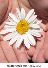 flower on the hands