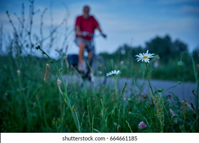 flower on roadside on a dike with blurred bicycle in the background