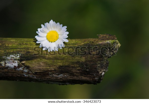 A flower on a rotten branch