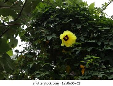 Flower on the Samosir island
