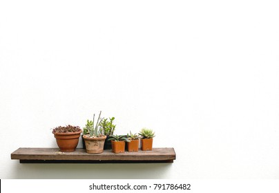 Flower on shelves on white wall background with free copy space for your creativity ideas text.