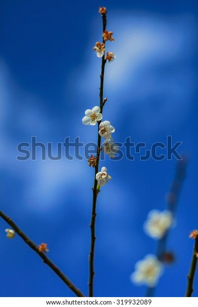 flower on the sky