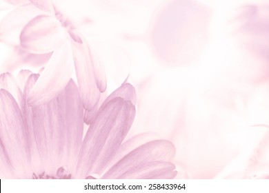 flower on soft pastel color in blur style