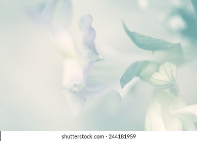 flower on soft sparkle pastel color