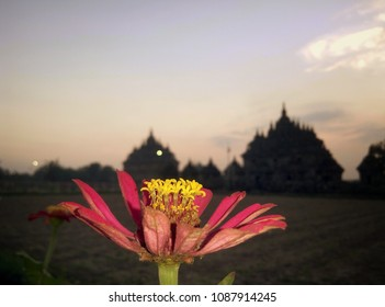 flower on sunset