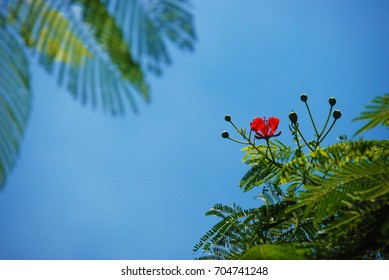 The flower on the tree