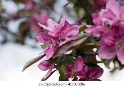 flower on the tree, flowering tree