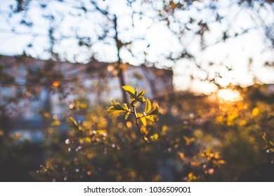 flower on trees