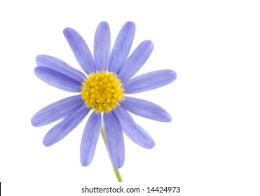 Purple flower with yellow center images stock photos vectors flower on a white background mightylinksfo