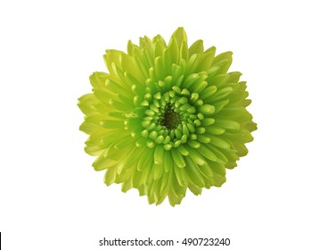 flower on a white background.