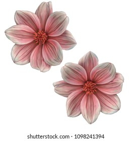 Flower on white background.   Isolated. Stylization: watercolor.