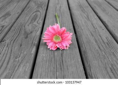 Flower on Wood - Black & White