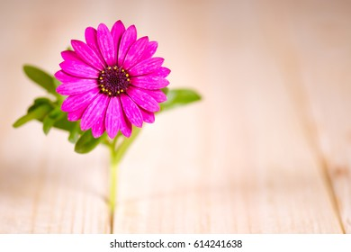 flower on wooden table with space for your text