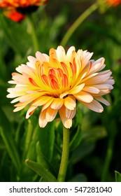 Flower in Park