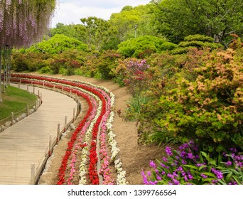Flower path in Ashikaga flower park in Tochigi prefecture in Japan in spring with a lot of colorful flowers. The park is a famous tourist spot.