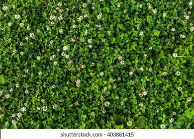 Flower pattern in garden background