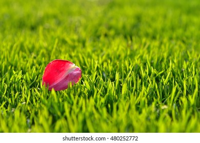 Flower petal on grass