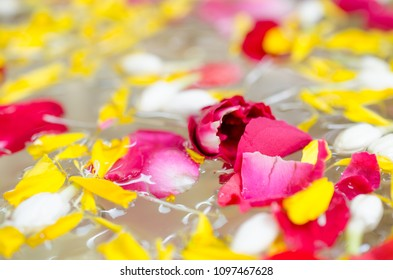 flower petals in a bowl with water.Used for watering ceremony Blessing the Elderly on Songkran festival.It is a tradition that continues to be ancient of Thailand.we used for monks and buddha statue