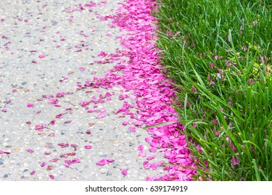 Flower petals and grass background