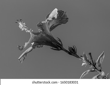 flower with petals and stamens with long stem in black and white