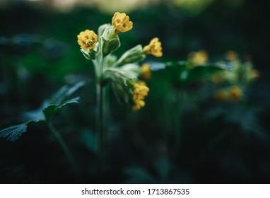 Flower Petar in natural Environment