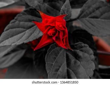 Flower Photograps from Garden
