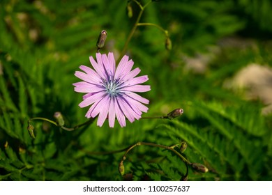 a flower with pink petals and blue pistils on a green background