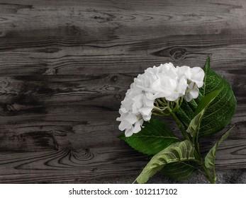 Flower plain wooden background