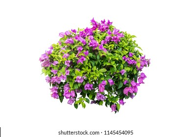flower plant bush tree isolated with clipping path