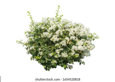 flower plant bush tree isolated include clipping path on white background