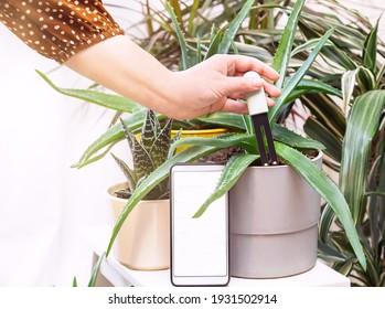 Flower, plant care concept. Woman's hand put soil, water, sunlight sensor (tester, monitor, register) in flower's (aloe vera) pot. Smart sensor works with mobile app. AI technology helps grow plants.