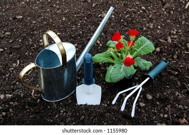 Flower Plant and Garden Tools
