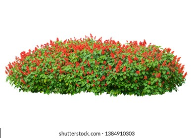 flower plant isolated with clipping path on white background