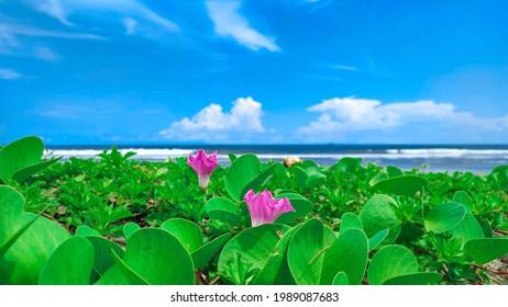 Flower plante with beach background
