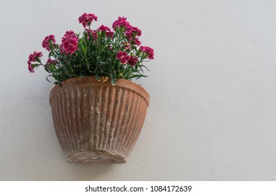 Flower pot fixed on the white wall