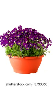 A flower pot full of spring violets.  Deep purple color.