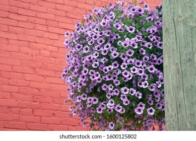 flower pot hanging on pink bricks wall background