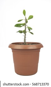 Flower pot isolated