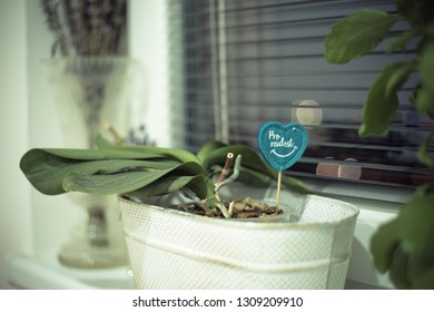 "Flower in the Pot. Letters ""Pro radost"" means ""For Fun"" - Shutterstock ID 1309209910"