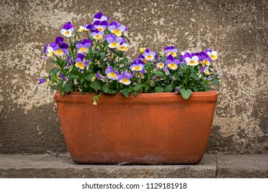 A flower pot with pansies or horned violets.