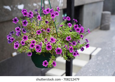 flower pot with purple flowers hang on the street