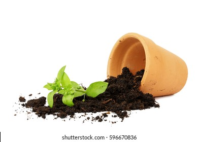 flower pot with spilled out soil isolated, damage concept