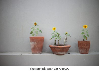 flower pot and the wall