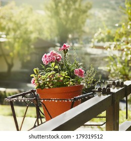 Flower pots with carnation flowers, mint and thyme in a metal basket holder