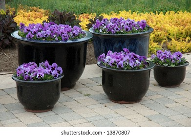Flower Pots Filled with Purple Pansies