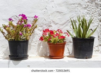 Flower pots in front of a white wall seen in Betancuria, Fuerteventura.