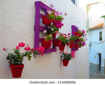 Flower pots on purple Painted wooden pallet in Village, Andalusia - Spain