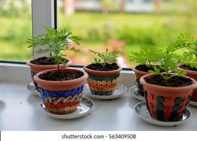 flower pots on windowsill