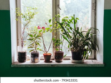 Flower pots on windowsill, beautiful window decoration with different kind of plants
